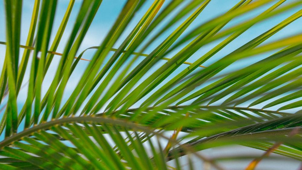 Palm Branch Pictures   Download Free Images on Unsplash