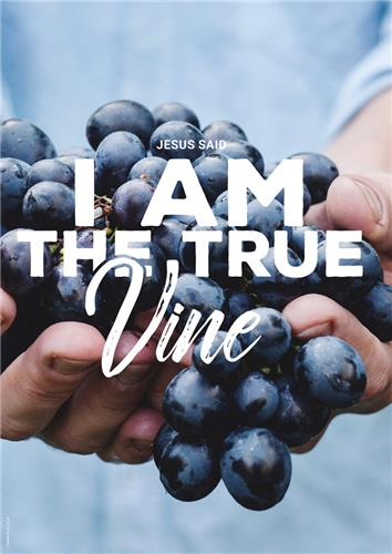 I am True Vine : General - Greeting Cards - Cards :: Christian Publishing  and Outreach (CPO)