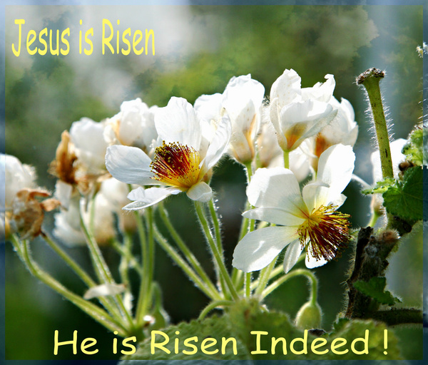 Jesus is risen Free stock photos in jpg format for free download 8.22MB