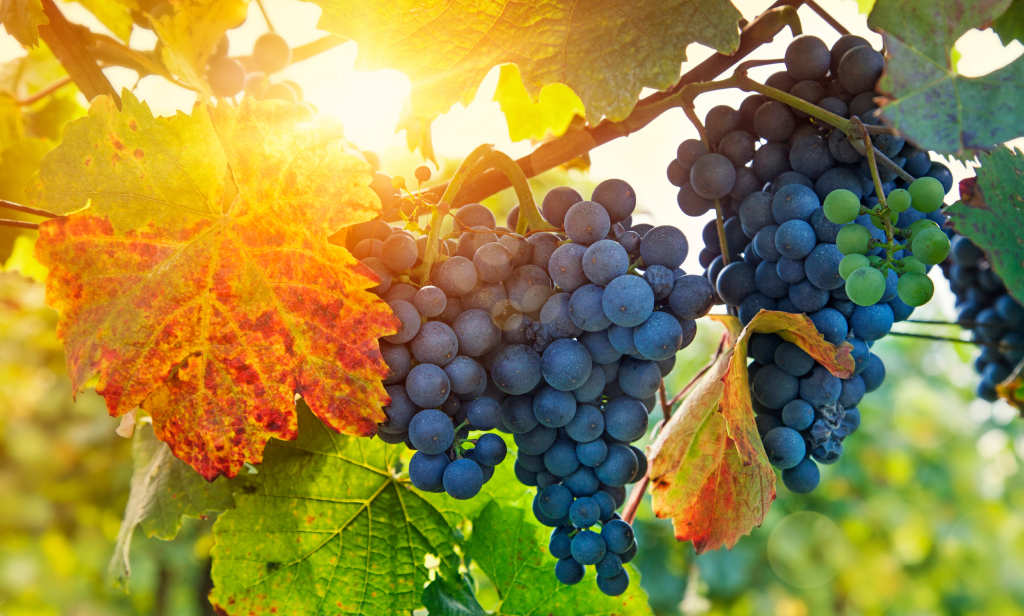 The Vine and the Branches (John 15:1-8) | Redeeming God