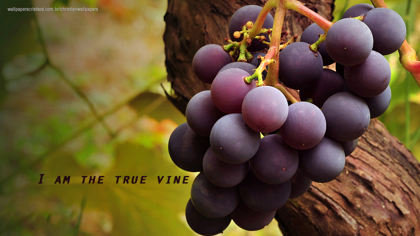 The Vine! | Christian Wallpapers